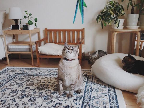 ダバードを見ている猫たち。
