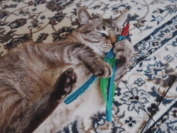 ダバードを抱えてじゃれる猫。