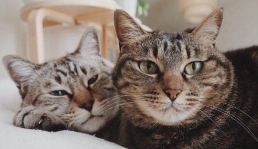 クーデレ猫のデレ期