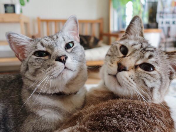 仲良しの兄弟猫。