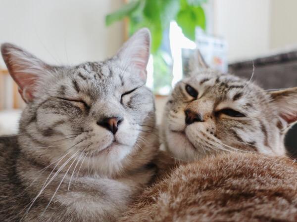 幸せそうな猫と眠そうな猫。