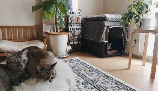 猫がいる部屋。