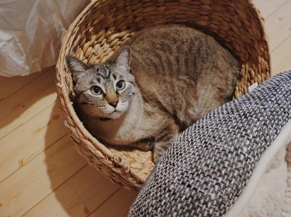 キョトンとしてる猫。
