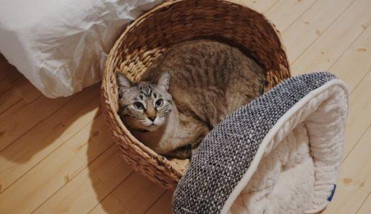 モコモコ猫ベッド、戦力外通告を受ける