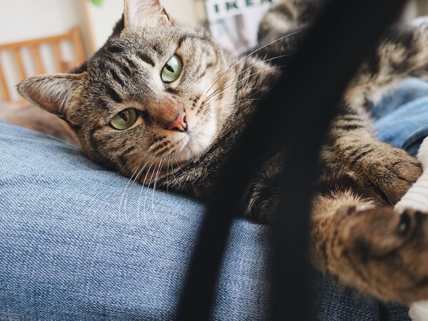 カメラのストラップを狙う猫。
