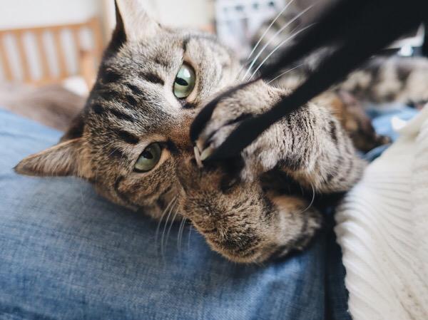 カメラのストラップを掴んで手繰り寄せる猫。