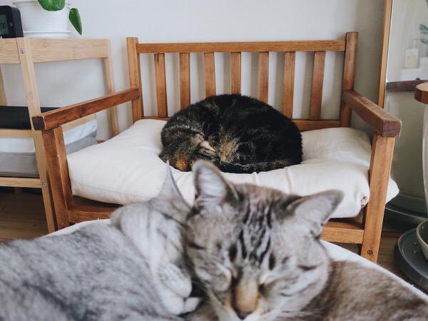 イチャつく兄弟猫と、ひとりで丸まって眠る姉猫。