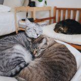 仲睦まじい兄弟猫。
