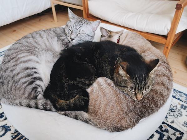 3色猫だんご。