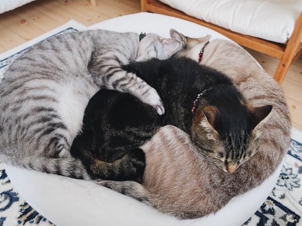 重なり合って眠る3匹の猫たち。
