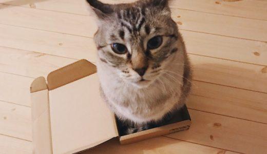 小さな箱にちんまり収まってる猫。