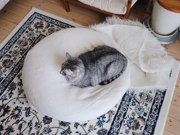 マシュマロクッションの上にいるテト(サバトラ猫)。