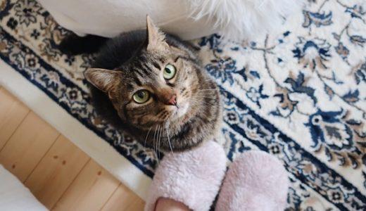 飼い主の足元でお座りしてる猫。