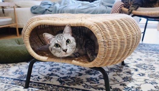 どう見ても猫専用としか思えないIKEAのスツールを買ってみた