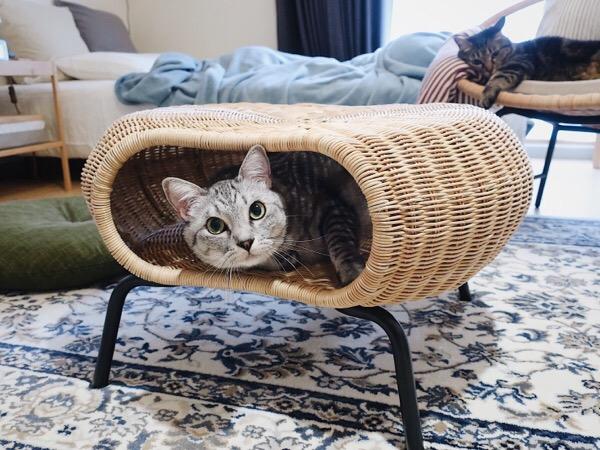 イケアのGAMLEHULT(ガムレフルト)の中に収まってる猫。