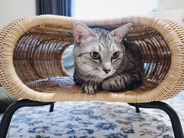 ラタン製のスツールの中にいる猫。