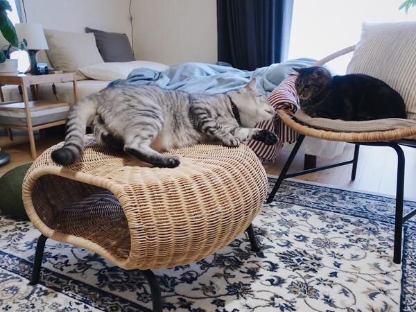 睨み合う2匹の猫。