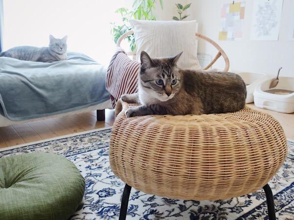 GAMLEHULT(ガムレフルト)の上で横たわる猫。