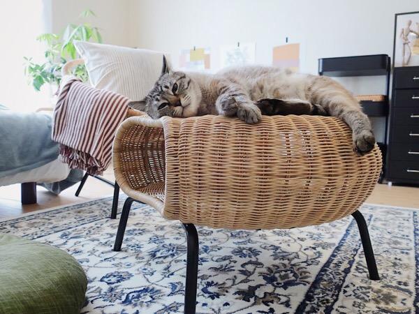 GAMLEHULT(ガムレフルト)の上に寝っ転がってるムク(シャムトラ猫)。