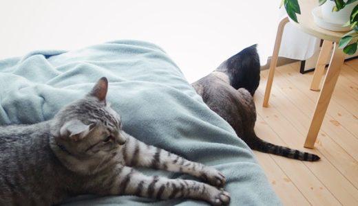 3匹の猫たちの様子。