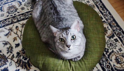 深緑色の座布団と猫。