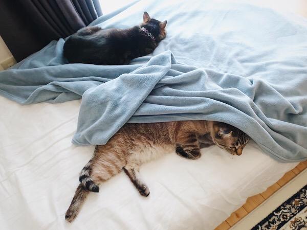 ベッドの上で寝ている2匹の猫たち。