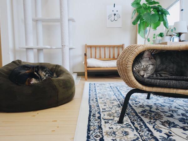 クッションで寝てるジーナ(キジトラ猫)と、スツールの穴で寝てるテト(サバトラ猫)。