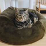 マシュマロクッションの上で香箱座りしてる猫。