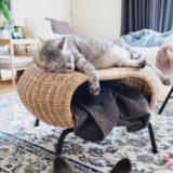 ラタンスツールの上で寝ているテト(サバトラ猫)。