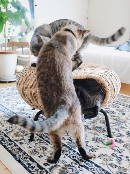 逃げ腰の兄猫。