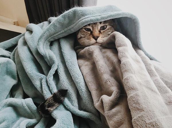 毛布から顔と尻尾だけ出している猫。