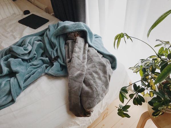 窓際のベッド周辺。