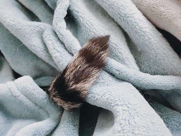 毛布からちょっとだけ出てる猫の尻尾。