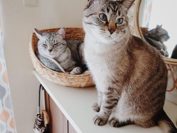 靴箱の上の2匹の猫。