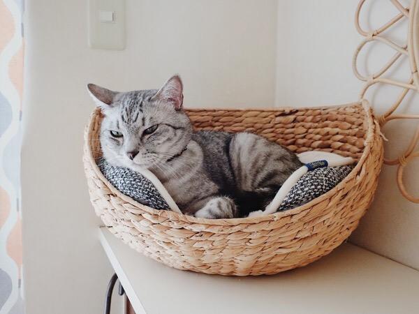 かごベッドに収まった猫。