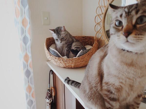 玄関に集まる猫たち。