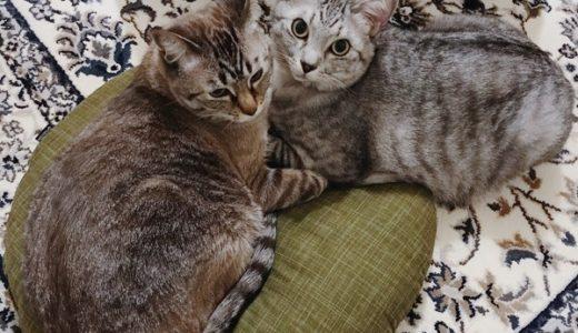 座布団に集う猫たち
