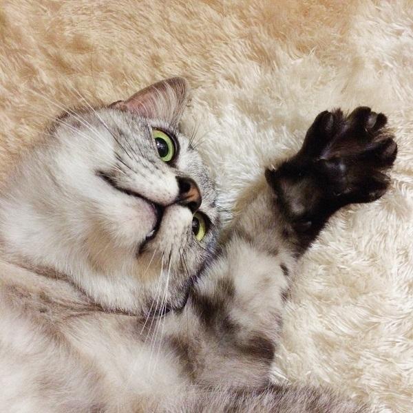 前足をパーの形に広げている猫。