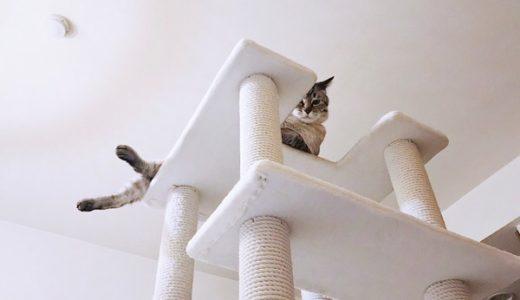 キャットタワーのてっぺんから下を見下ろす猫。