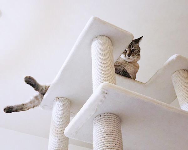 変な体勢でこっちを見ている猫。