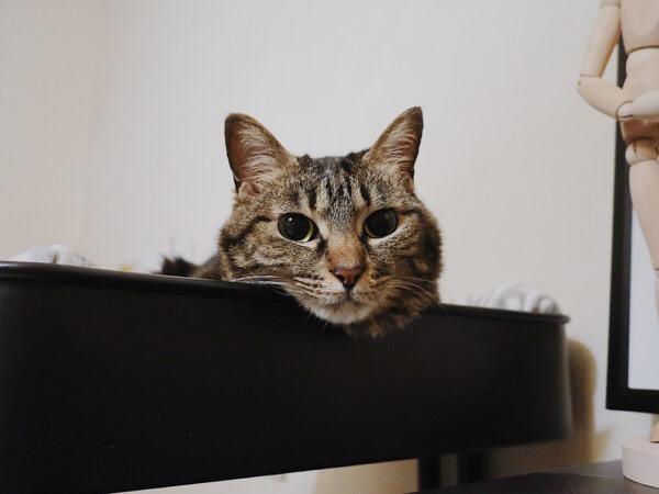 ワゴンから顔だけ出している猫。