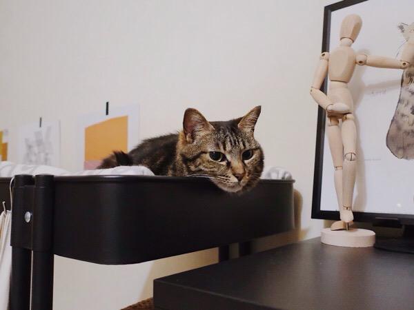 イケアのワゴンを寝床にしているジーナ(キジトラ猫)。