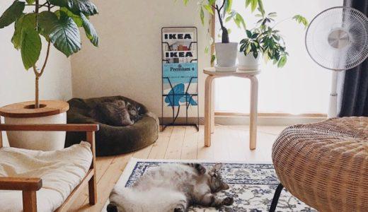 猫がいる部屋の一角。