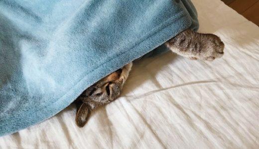 猫の寝相が変すぎてビビる