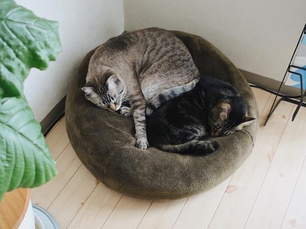 部屋の隅のクッションで寝ている2匹の猫。
