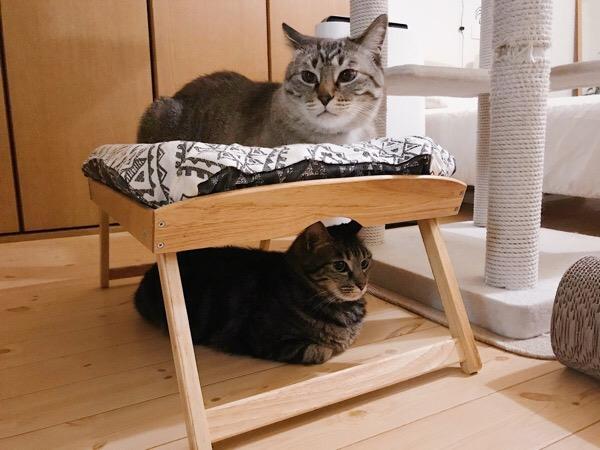 ムク(シャムトラ猫)とジーナ(キジトラ猫)。
