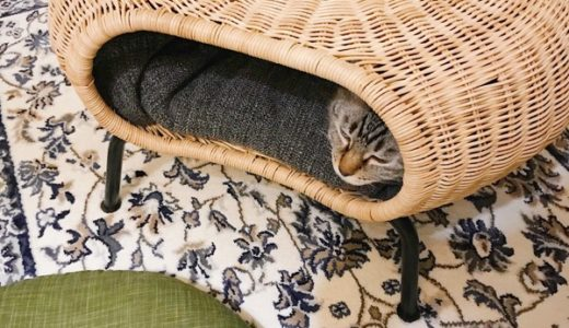 猫の隠れ家
