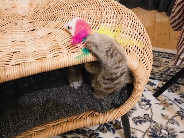 おもちゃを掴む猫の手。