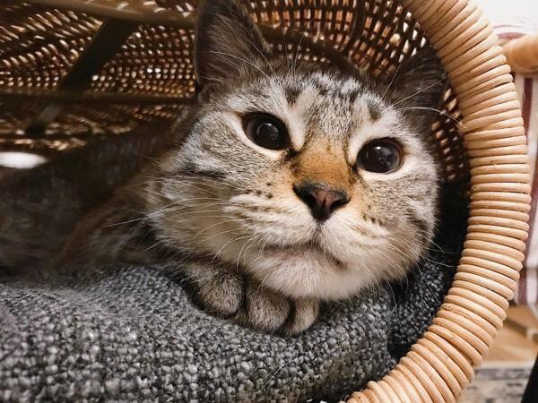 黒目まん丸な猫。