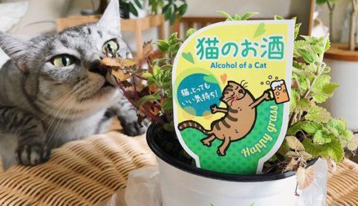 初めてのキャットニップ、猫たちの反応は?